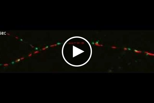 Video: Nerve Cell Power Plant Dancing