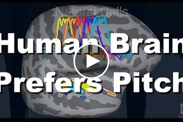 A brain imaging study has found that the human brain strongly favors harmonic sounds over noise, compared to the macaque monkey brain. The results suggest that speech and music may have shaped our brain's hearing circuits. The two species appear to have evolved differences in the functional organization of brain regions involved in pitch perception. Bevil Conway, Ph.D., of the NIH Intramural Research Program, senior author on the study, explains its findings. The study was published June 10, 2019 in the journal Nature Neuroscience.